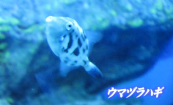さかなクン08-2