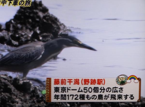 あおなみ線12