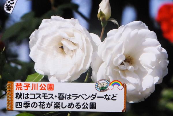 あおなみ線11
