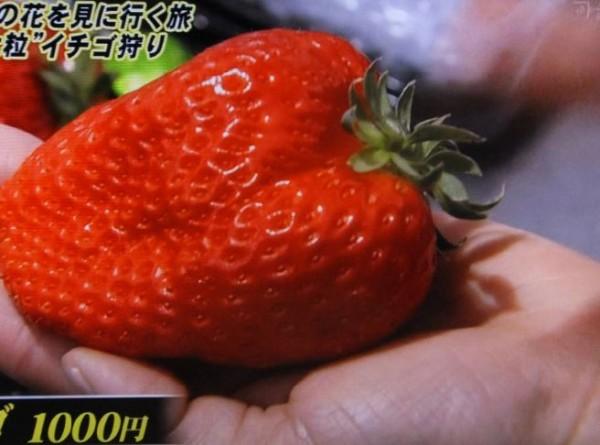 イチゴ狩り02