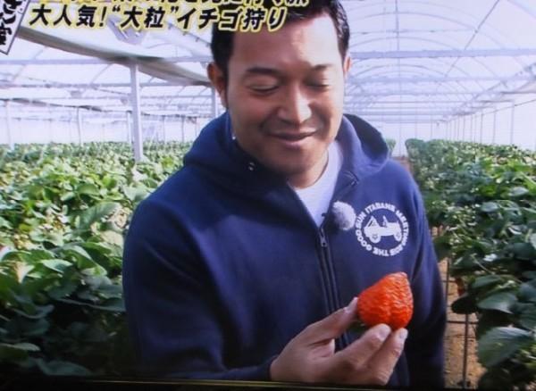 イチゴ狩り03