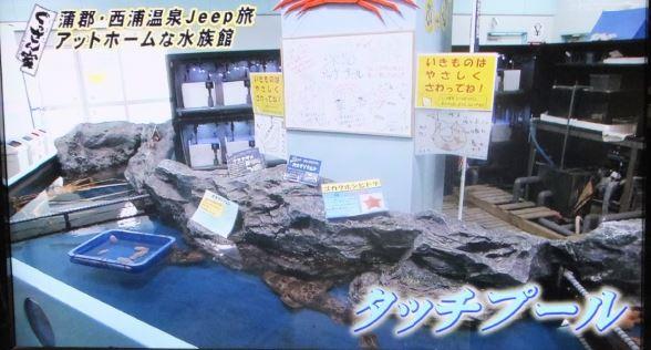 竹島水族館5