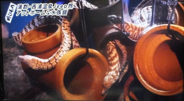 竹島水族館8
