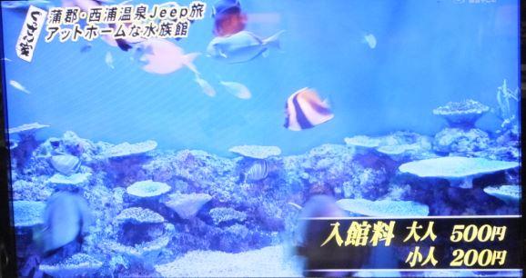竹島水族館3