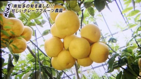 萬秀フルーツ3