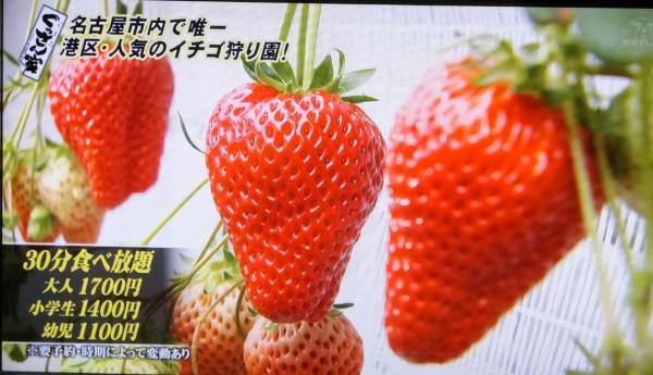 いちご畑2